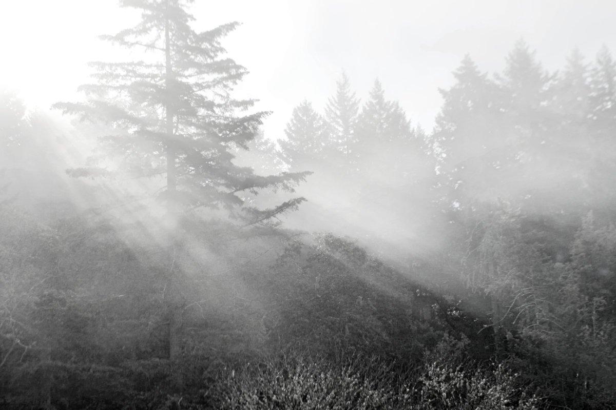 Light Landing (photo)