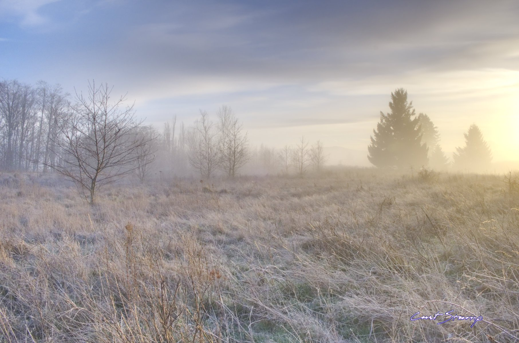 Frosty morning in a field (Powell Butte in Portland, Oregon). Warm yellow sun, frost, trees in distance, clouds and blue sky.