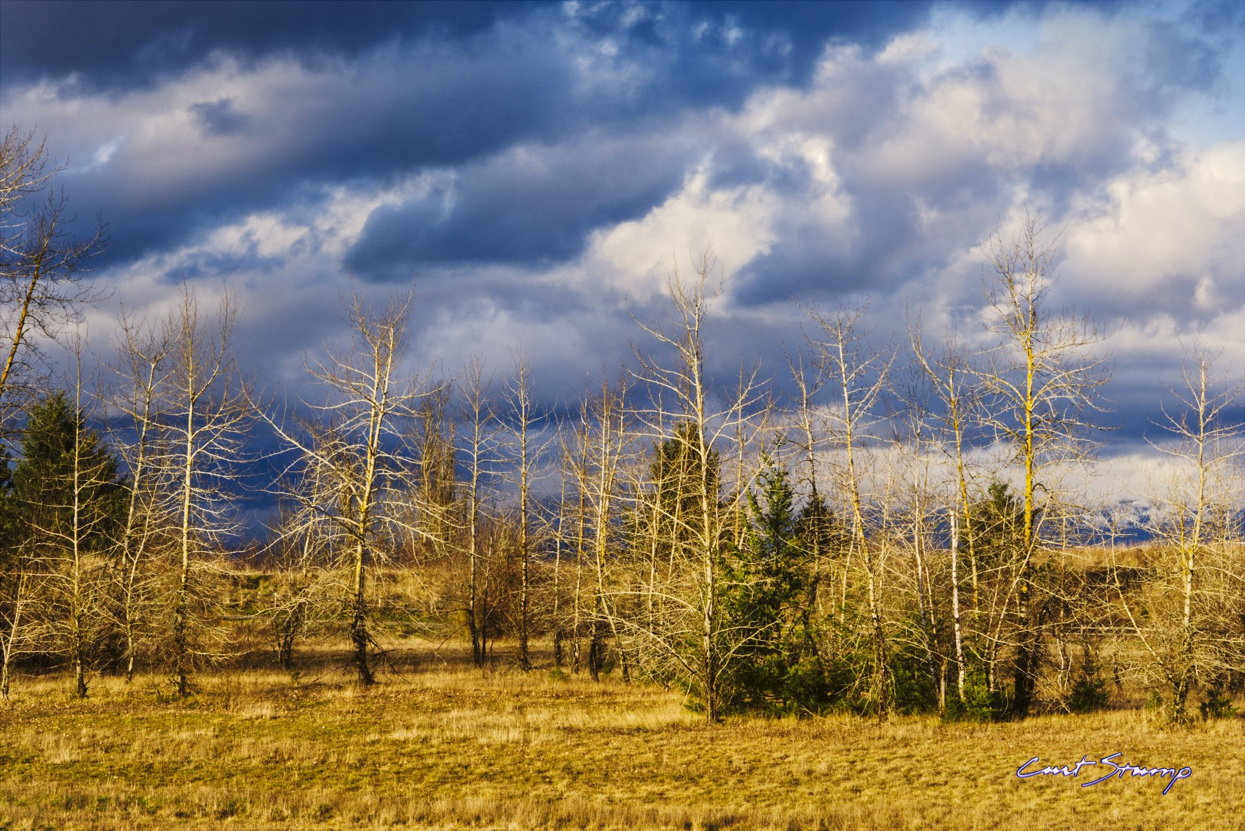 Photo of golden trees and field against a cloudy blue sky. Location: Powell Butte, Portland, Oregon.