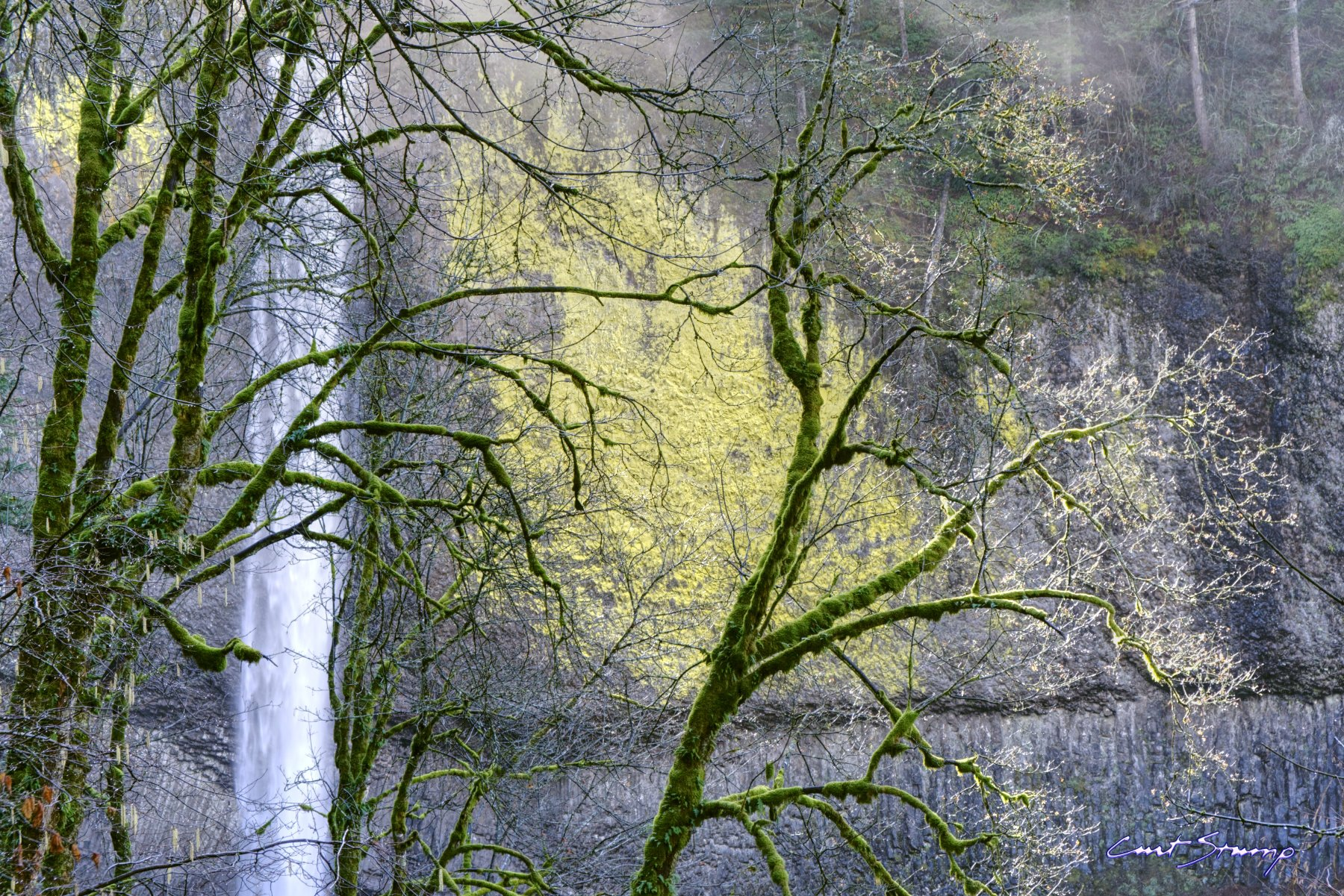 Photo of Latourell Falls near Portland, Oregon. Photo shows bright green moss on trees, waterfall through the trees, and yellow lichen on a rock cliff.