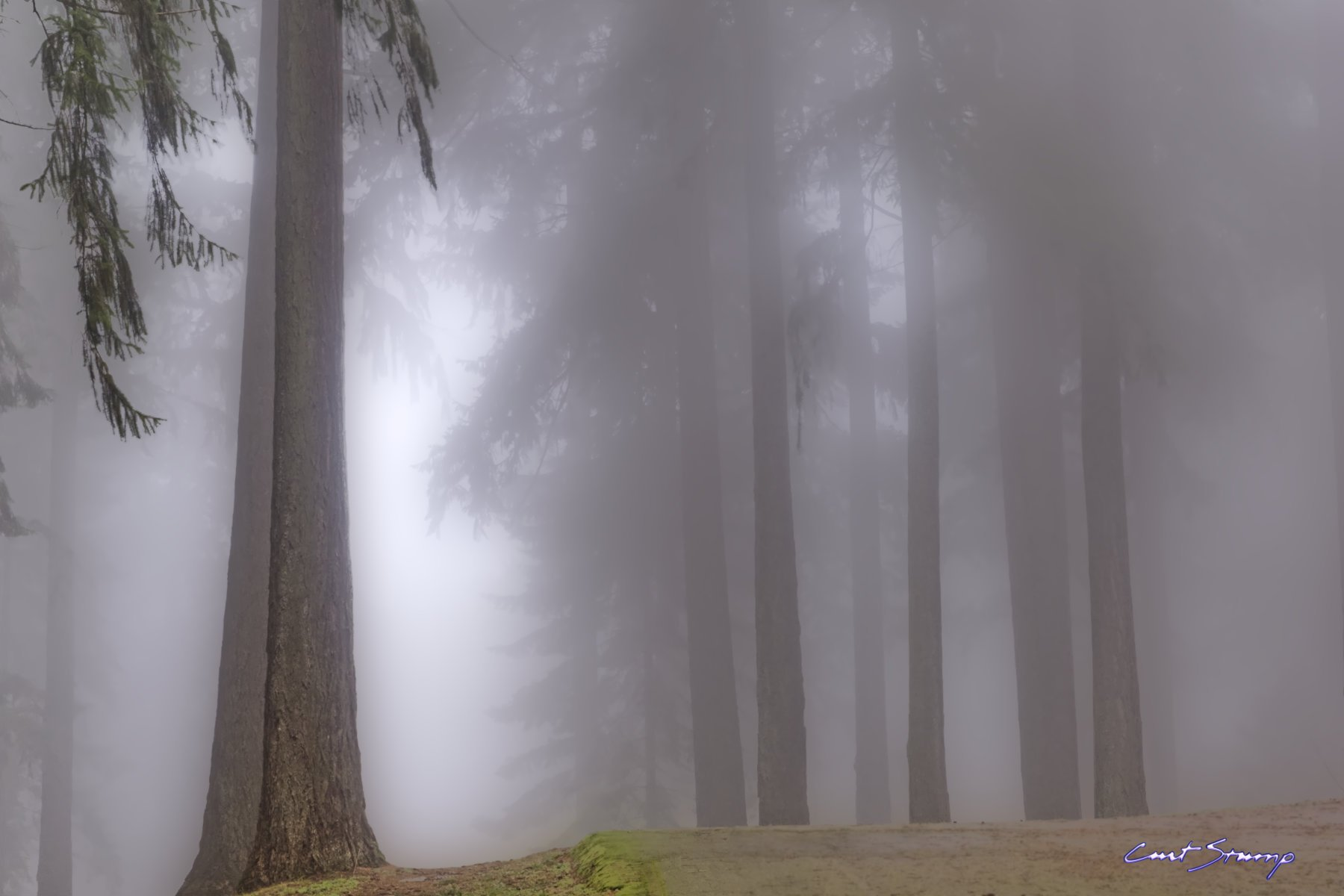 Fog and trees in Mount Tabor Park, Portland, Oregon.