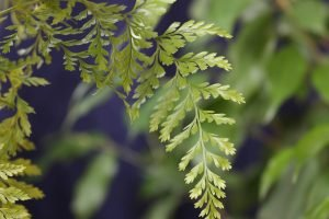 A constellation of ferns and leaves
