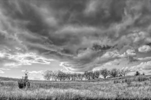 Black and white photo of a field with a row of trees and thunderstorm clouds, location Powell Butte, Portland, Oregon